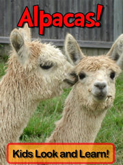 Alpacas! Kids Look and Learn written by Becky Wolff