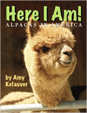 Here I Am Alpacas in America written by Amy Kefauver