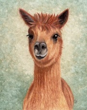 Alpaca Brown watercolor painting by Sherry Goeben