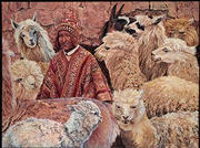 Alpaca Shepherd painting by Christine Lytwynczuk