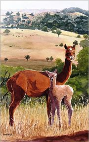 Are You Talking To Us Alpaca Painting by Renata Wright