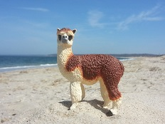 Ruffo the Alpaca at Sunken Meadow Beach