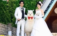 Japanese Couples Hiring Alpacas to Witness Weddings