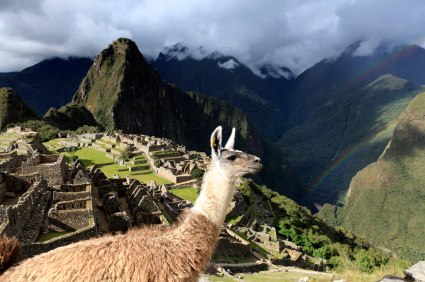 Pictures of Llama at Machu Picchu