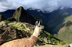 Llama at Machu Picchu located in the Cusco Region of Peru